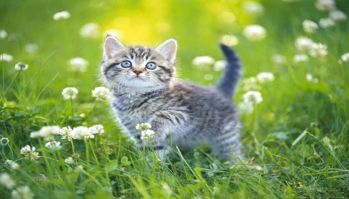 Kucing Imut