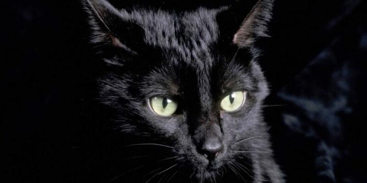 Benarkah Menabrak Kucing Akan Mengalami Kesialan