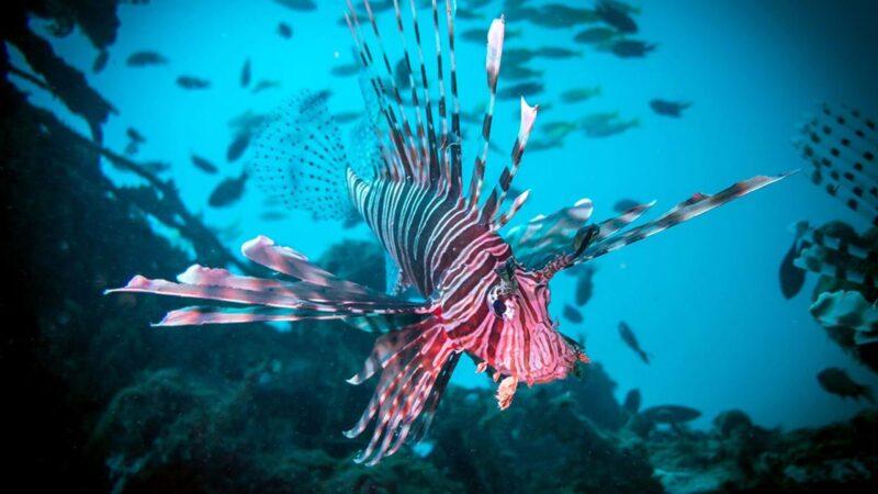 Daftar Ikan Paling Berbahaya Di Dunia Bagi Manusia