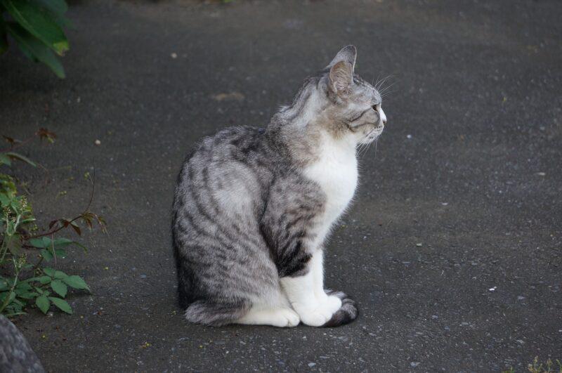 Mitos Menabrak Kucing