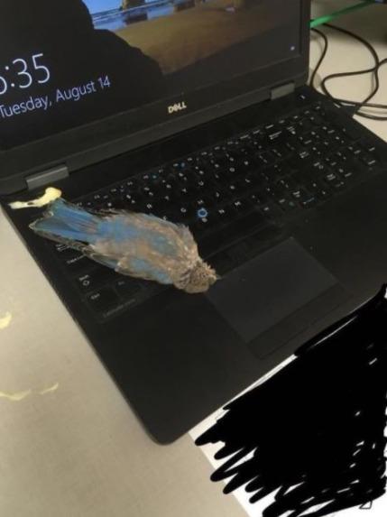 Momen Sial Pas Pake Laptop 6