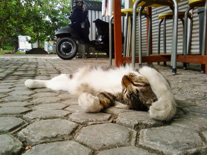 Hukum Menabrak Kucing Tanpa Sengaja