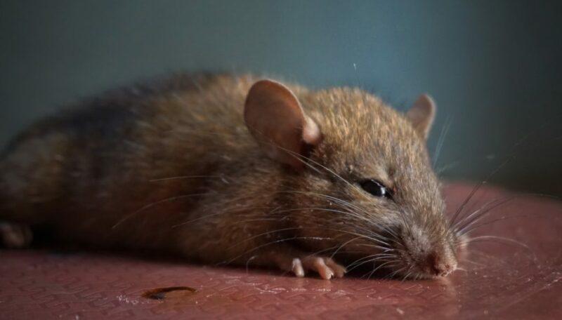 Akses Jalan Tikus Yang Gampang