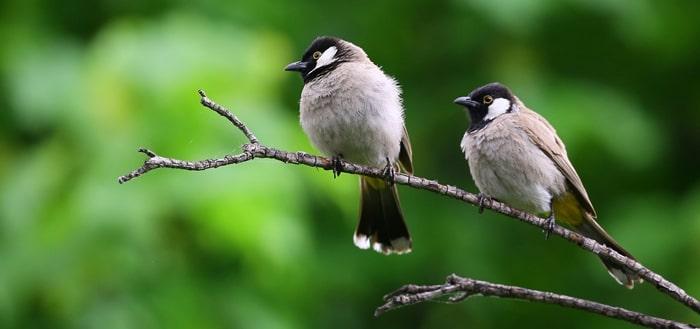 Alasan Burung Berkicau Di Pagi Hari