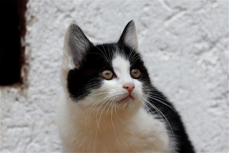 Kucing Menunjukkan Rasa Cinta Dengan Mengedipkan Mata