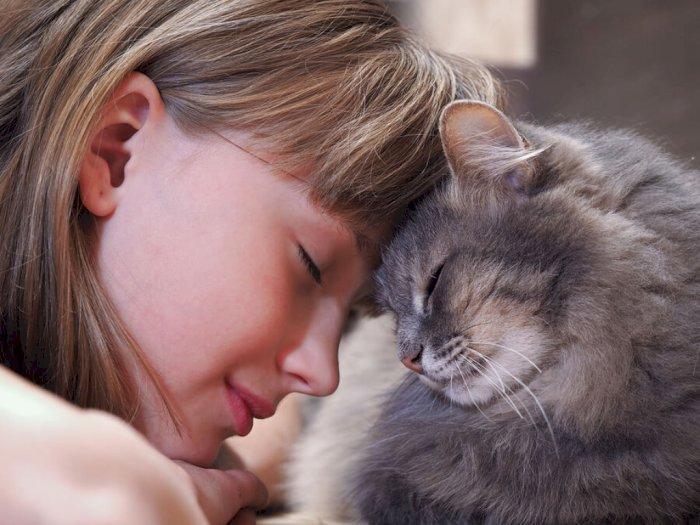 Sikap Kucing Menggosokkann Tubuhnya
