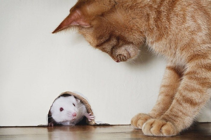 Tempat Hangat Sangat Disukai Tikus