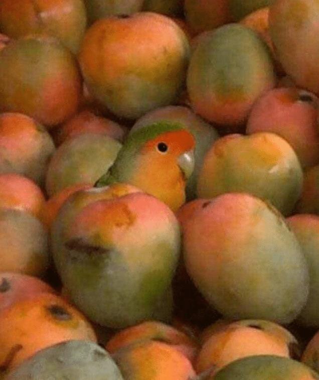 burung tampil beda