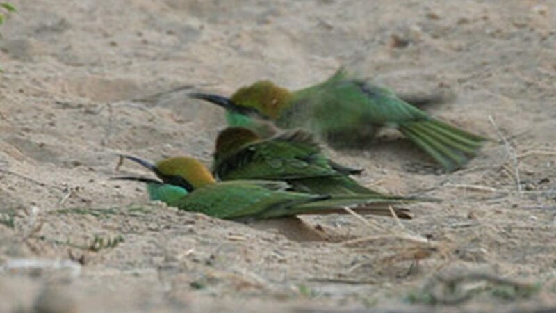 Burung Tidak Disetrum Karena Tidak Menyentuh Tanah