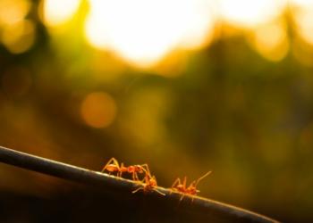 Mengapa Semut Tidak Pernah Kejebak Macet