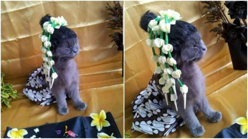 Pria Ini Rayakan 7 Bulanan Kucing Peliharaan