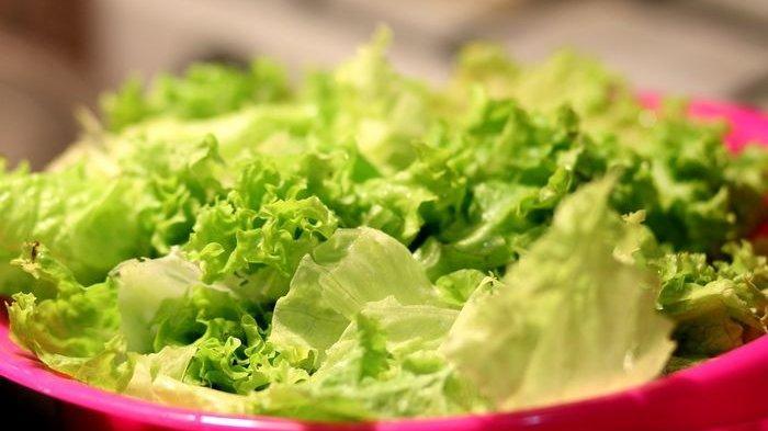 Dikenal Menyehatkan Terlalu Banyak Makan Selada Rupanya Bisa Sebabkan 4 Dampak Buruk Bagi Kesehatan