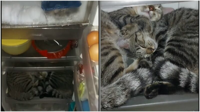 Lucu Kucing Suka Tidur Dalam Kulkas