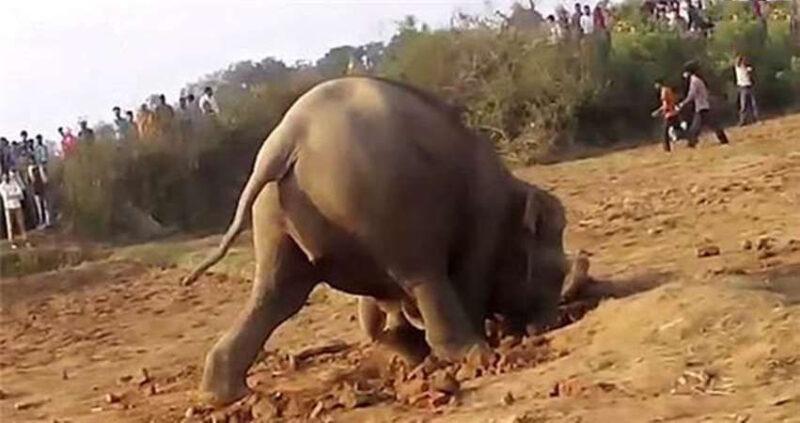 Penyelamatan Gajah