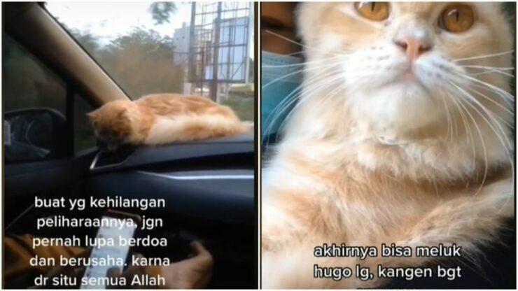 Viral Kucing Peliharaan Hilang Selama 4 Hari, Ditemukan Lewat Postingan Facebook