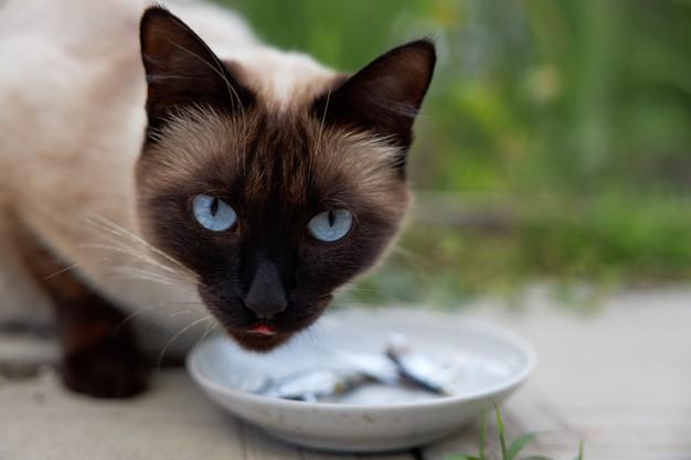 Makanan Kucing Terbaik