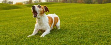 Anjing melolong mahluk halus