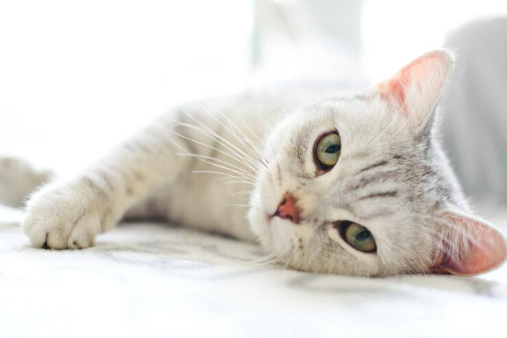 5 Ciri Ciri Kucing Sakit Yang Harus Kamu Ketahui Agar Mpuss Cepat Sembuh