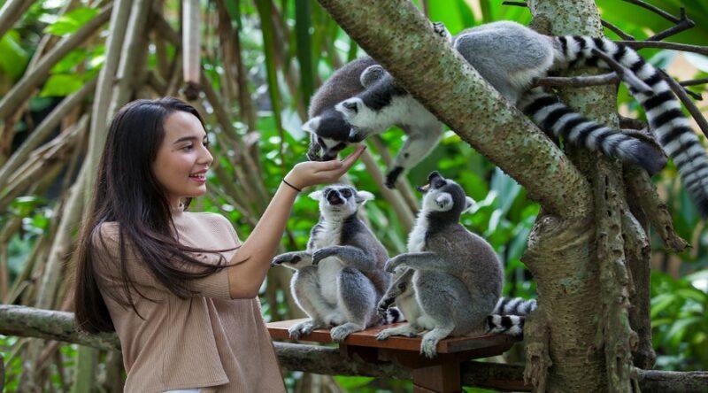 Bali Zoo 1 900x500