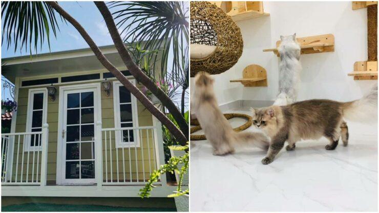 Pasangan Ini Bangun Rumah Mewah Hanya Untuk Kucing Peliharaan