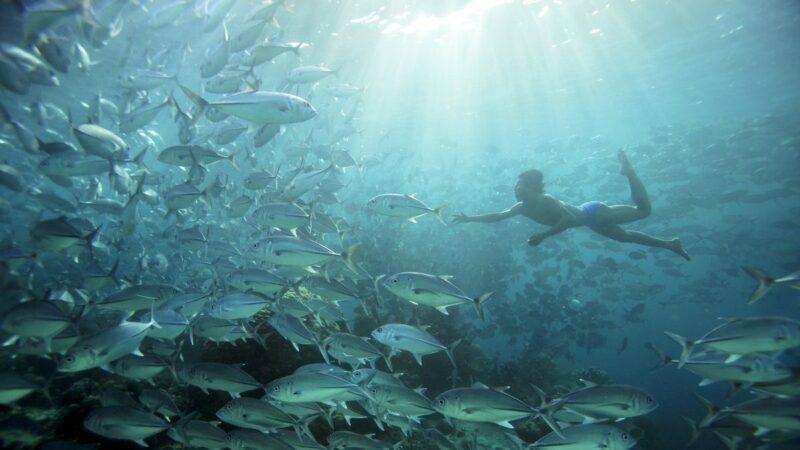 Penemuan Aneh Dalam Dunia Medis Manusia Ikan