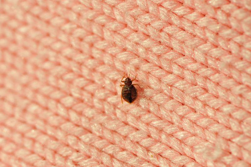 Single Bed Bug On A Blanket Fiber Royalty Free Image 183382435 1566232422
