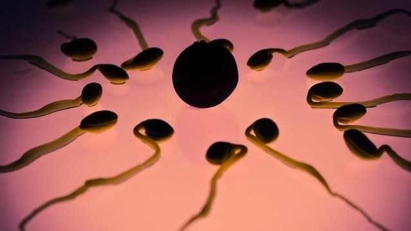 sperma dan air mani