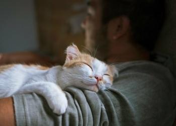 5 Penyebab Kucing Tidak Bisa Tidur Saat Malam Hari