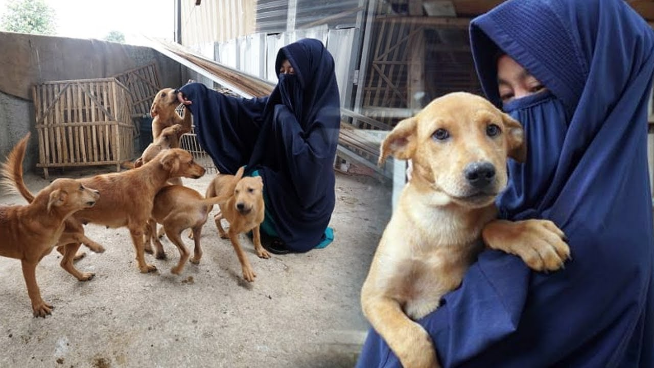 Kisah Wanita Bercadar Yang Pelihara 70 Anjing Liar Di Bogor Namun Ditolak Oleh Warga