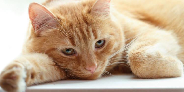 Kucing Tidak Bisa Tidur Saat Malam Hari Mengalami Gangguan Kesehatan
