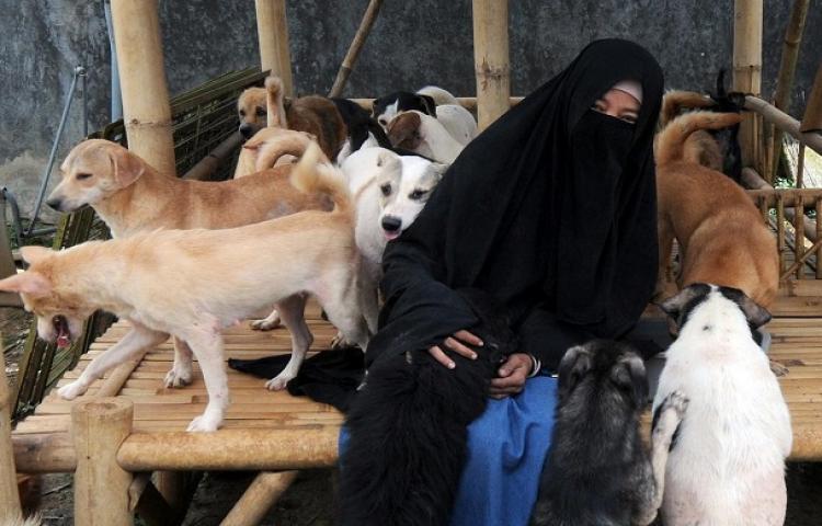 Pelihara 70 Anjing