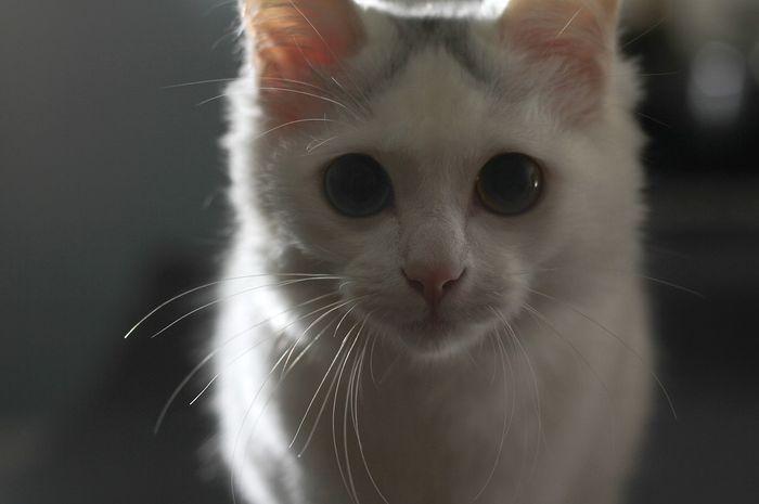 Penglihatan Kucing Yang Luar Biasa