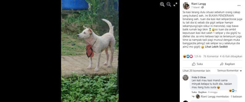 Anjing Suka Menggigit Sandal