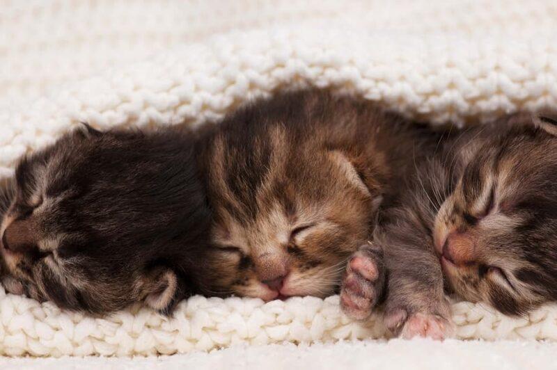 Kapan Mata Anak Kucing Terbuka
