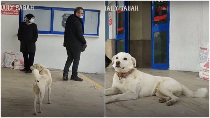 Kisah Anjing Setia Menunggu Majikannya Yang Terbaring Di Rumah Sakit Selama 14 Hari