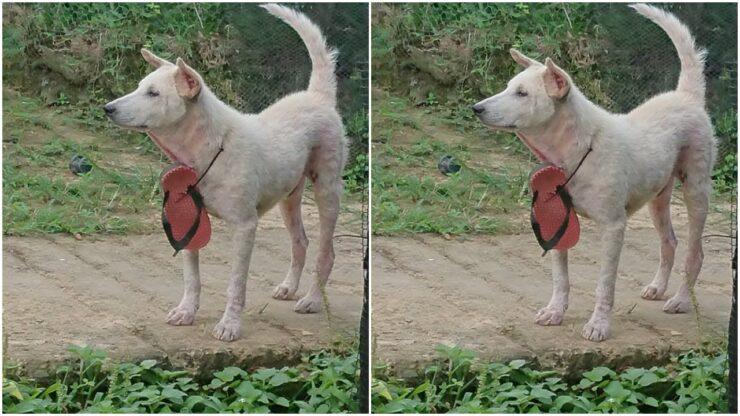 Kisah Anjing Yang Suka Mengiggit Sandal, Meresahkan Warga Satu Kampung