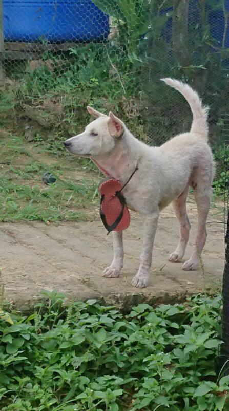 Kisah Anjing Yang Meresahkan Warga