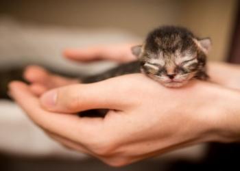 Mengapa Mata Anak Kucing Baru Lahir Tertutup