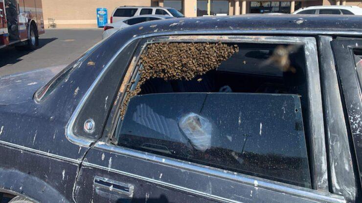 Ngeri, Sebanyak 15 Ribu Lebah Nomplok Di Mobil Ini Dalam Waktu Sekejap