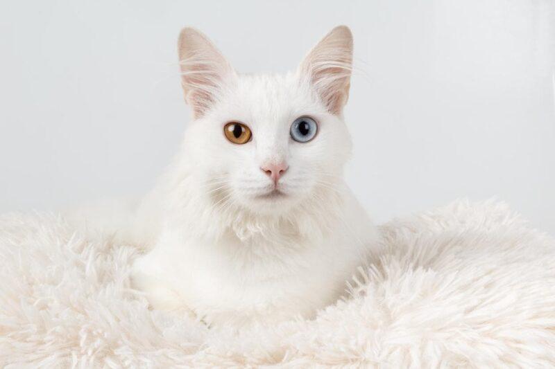 Warna Mata Kucing Akan Berubah
