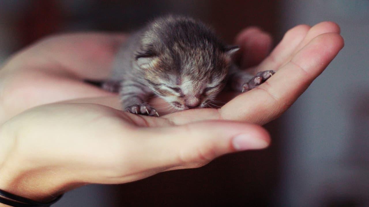 10 Cara Merawat Anak Kucing Tanpa Induk Yang Baru Lahir