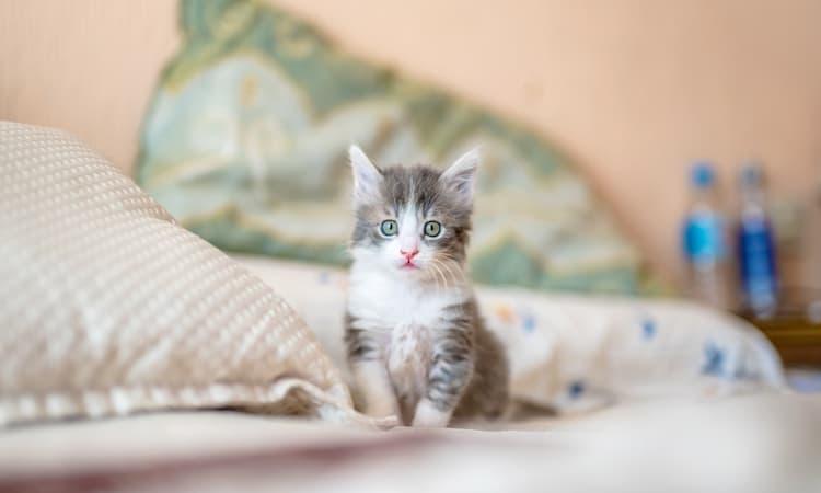 Merawat Kucing Tanpa Induk