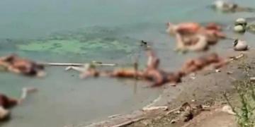 Pilu, Jenazah Pasien Covid Dibiarkan Membusuk Di Sungai Gangga, Anjing Dan Burung Berpesta