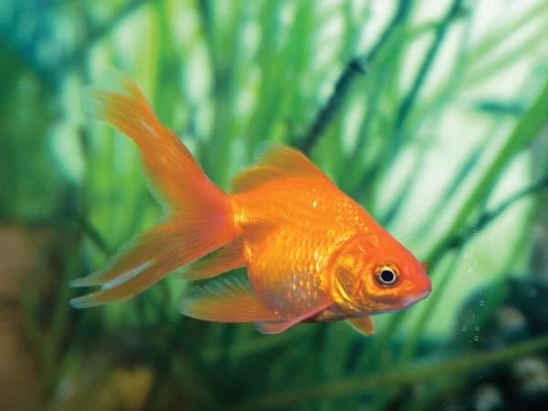 Apakah ikan bisa tidur? Kelopak Mata Ikan