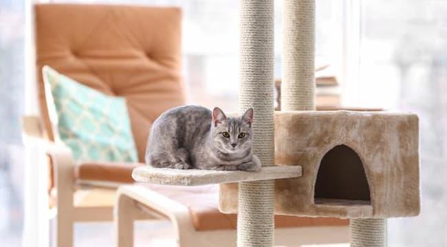 Alasan Induk Kucing Memindahkan Anaknya Tempat Yang Kotor