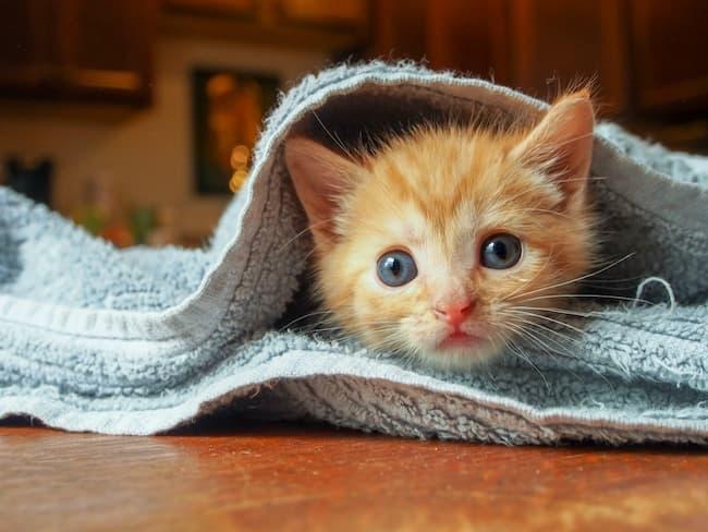 Anak Kucing 2