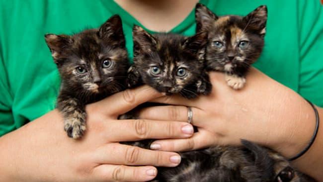 Induk Kucing Suka Memindahkan Anaknya Karena Dekat Dengan Jangkauan Manusia Dan Hewan Lain